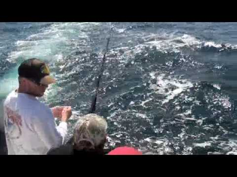 Mako Shark - Fishing for Tuna and caught something different