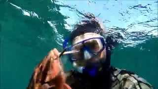 Spearfishing with Mad Mick