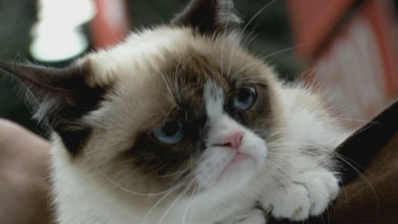 Grumpy Cat Baby Pictures