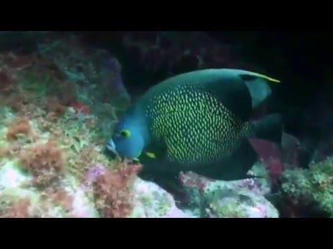 Caribbean Sea Coral Reefs