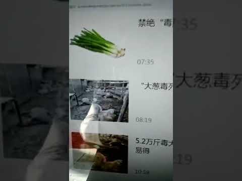 大蔥毒死羊事件,視頻整理曝光。已經有上百萬斤有毒大蔥銷往全國各地,太恐怖了