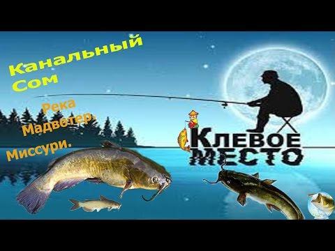 fishing planet как поймать рыбу