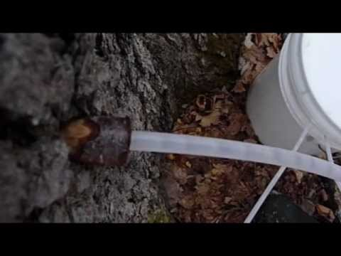 Producing and making sweet, golden Maple Syrup. This is a video produced by Jere Folgert (Bozeman, Montana) In memory of our dad, Pat Folgert, who passed awa...