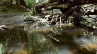 Watch Squealer Grey video