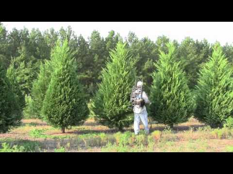 Small White Christmas Trees