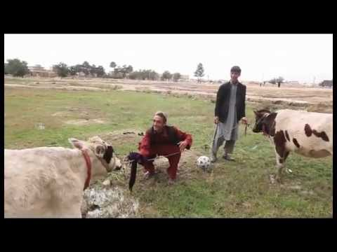 Afghanistan - Helmand Young boys