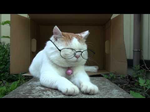 【本当に?】老眼鏡をかけるだけで視力回復!?