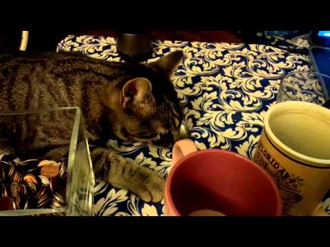 Funny!!!Cat Molik is trying to get some coins. Кот играет с монетами! Смех!!!))))