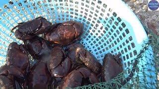 Xem anh thợ lặn Bán đồ Sau một ngày lặn mò dưới đáy biển/sea food in vietnam