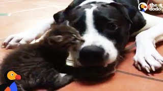 Kitten Rescued From Hurricane Has BEST Dog Brother Now   The Dodo
