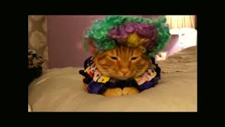 Cats try on Funny costumes