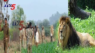 Police 'Operation Hunting' for Lion in Kurnool - బయాందోళనలో గ్రామస్తులు!  - netivaarthalu.com