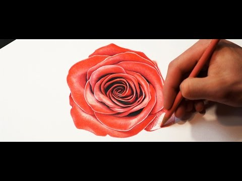 ROSE DRAWING 4K – Drawing Realistic Rose with Color Pencils (How To Draw A Rose)  4K Time Lapse Art