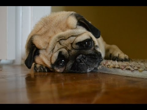 Sad Dog Diary video