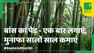 Bamboo Farming: (बांस की खेती) In Baatein Kheti Ki - On Green TV