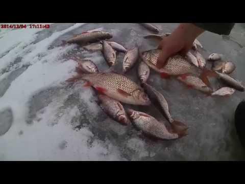 замор рыбы как ее ловить видео