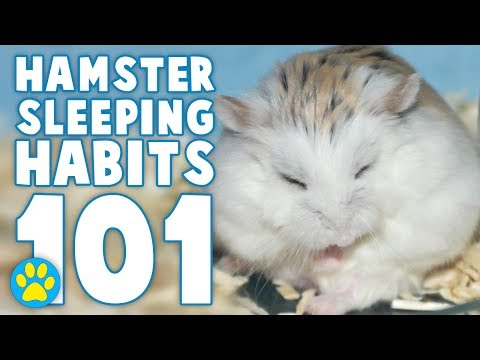 the day i got my hamster