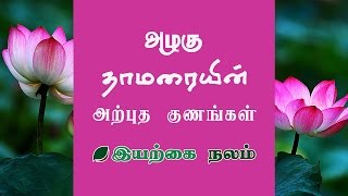 Categories video lotus flower tea benefits lotus flower uses in tamil thamarai benefits mightylinksfo