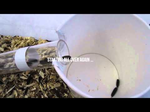 Farm432: Insect Breeding