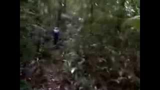 """Hutan Pedalaman """"Menuju Lokasi Harta Batu Mulia"""""""