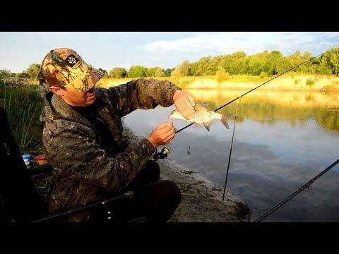 ловля фидером на реке ахтуба