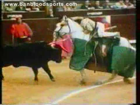 Bullfighting cruelty - Please boycott bullrings