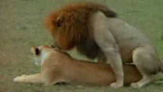سكس حيوانات ـ 2009