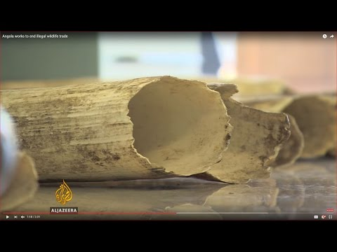 Angola works to end illegal wildlife trade