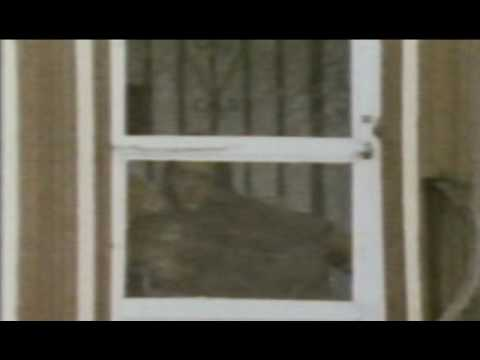 elvis presleys ghost - YouTube