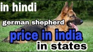 German shepherd price in india in her states    dogs biography