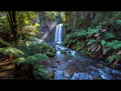 Suara Alam Membuat Tenang Fikiran - Suara Burung Dan Air Mengalir