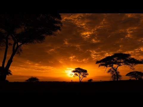 Cool African Music - African Safari video