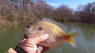 Fishing For JUMBO Bluegill and Shellcracker With Squirrel Tail Jigs