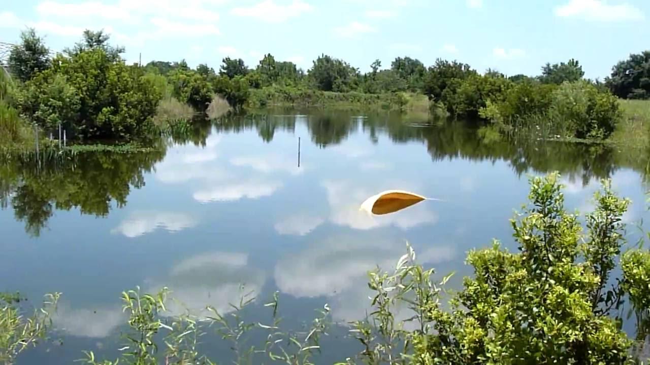 Aqua farm for sale arcadia florida youtube for Fish farms in florida