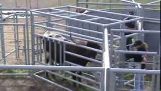 Longhorn Moss Extreme Cattle Pen