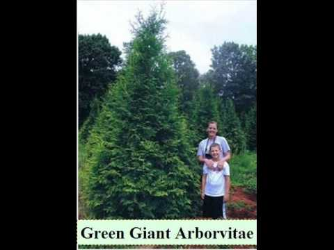 Chumbawamba - House Plants