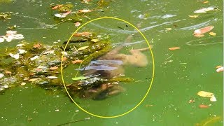 Unbelievable baby Timo swim in very deep water without mom, Brave baby swim very funny