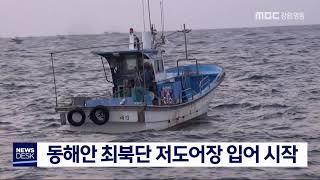 동해안 최북단 저도어장 입어 시작