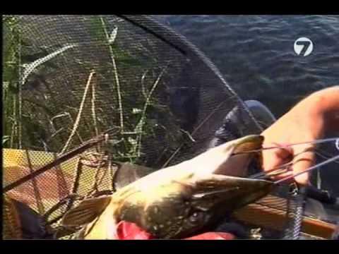 видео разговоры о рыбалке