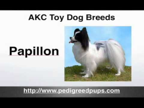 AKC Toy Dog Breeds - AKC Toy Dogs - Toy Dogs