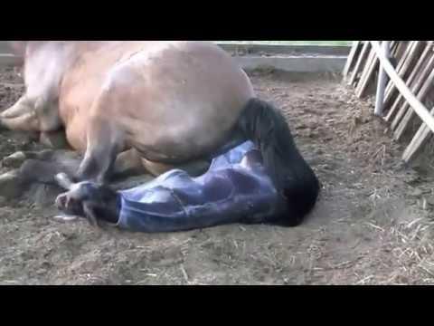 Лошадь рожает жеребёнка!!! Посмотрите!!!