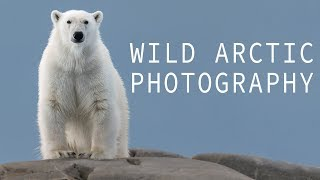 Wild Arctic Photography - The Polar Bear was Swimming Toward our Zodiac!