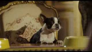 Palace Pour Chiens - bande annonce VF