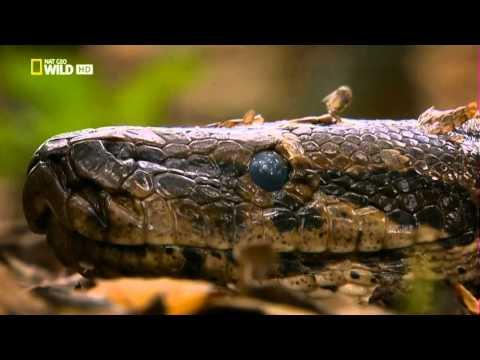 Congo salvaje 1  Un rio de monstruos