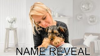 New Puppy NAME REVEAL!