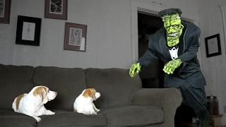 Dogs Love Frankenstein Prank: Cute Dogs Maymo & Penny