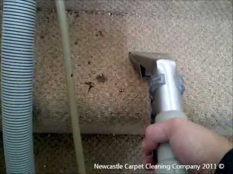 Newcastle Carpet Cleaning Company