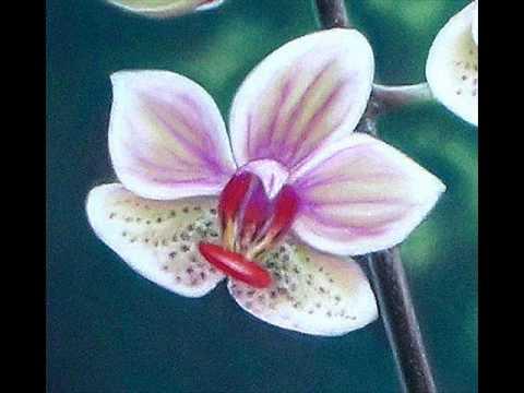 Roses orchid es tableau au pastel sec by thod youtube - Fleurs a dessiner modele ...