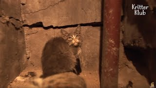 Kitten Takes Care Of Her Mom's Corpse | Animal in Crisis EP18