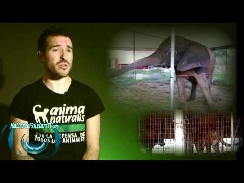 No a los Circos con Animales! MallorcaSolidariTV Reportaje de Sensibilización HD